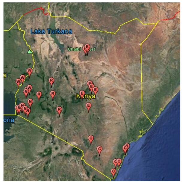 Molecular detection of viruses in Kenyan bats and discovery