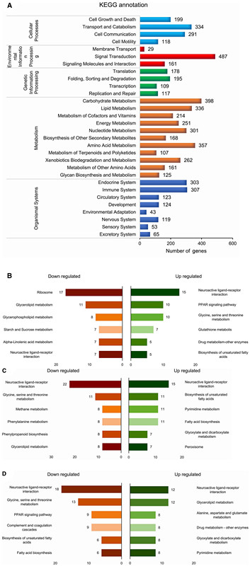Insights into the Temporal Gene Expression Pattern in <i>Lymantria