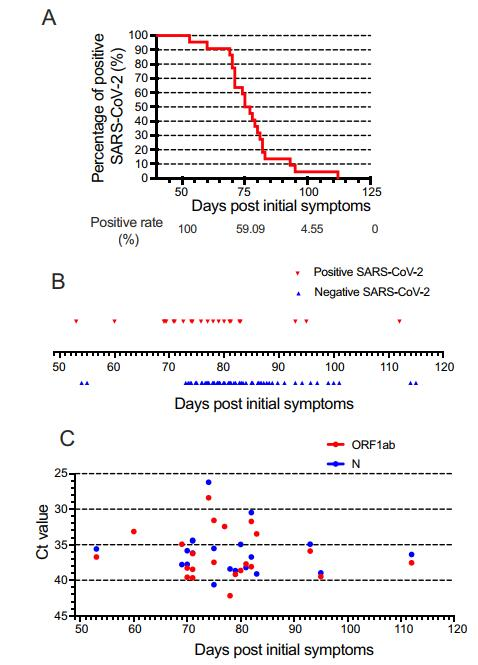 Long-Term Existence of SARS-CoV-2 in COVID-19 Patients: Host Immunity, Viral Virulence, and Transmissibility